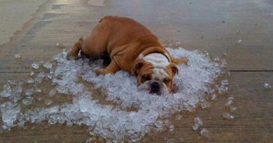 Onda de calor en México provocará en BCS temperaturas mayores a los 40 grados: SMN