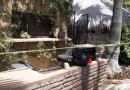 Causa hermetismo muerte de mujer extranjera en Todos Santos; familiares exigen el esclarecimiento