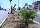 Implementa Programa de Limpieza y Reforestación de camellones de Los Cabos
