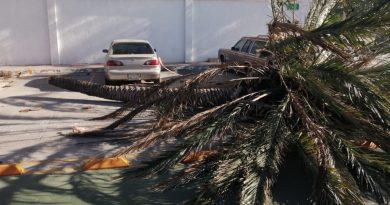 Vientos de hasta 60km derriban árboles en La Paz