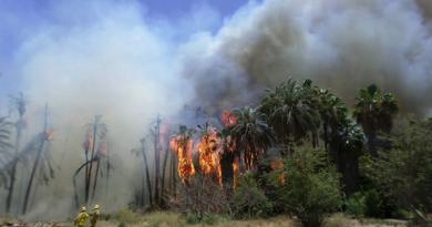 En marzo inicia la temporada de incendios en BCS