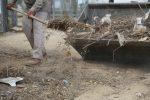 Llaman a no acumular cacharros para evitar reproducción de fauna nociva